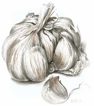 'Garlic' by Linda Weil